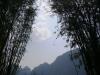 thailand_bambus_see