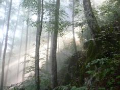 Wald beim Felsentor